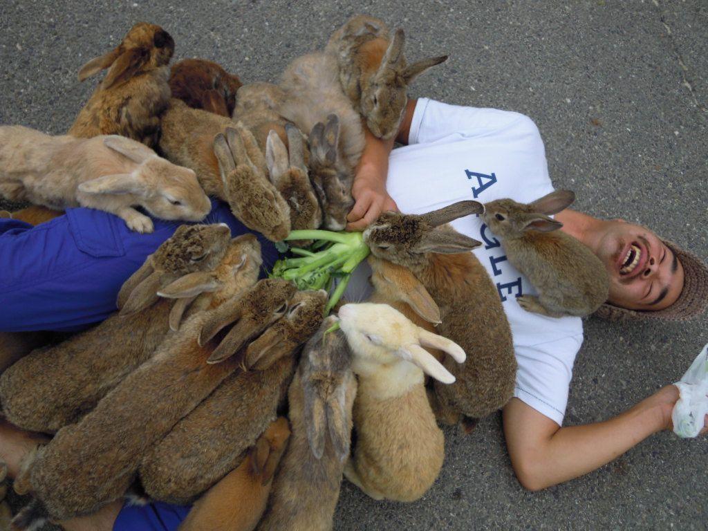 "Okunoshima aka ""Rabbit Island"" (via 第191巻 大久野島よりバターラビット - みかん汁)"