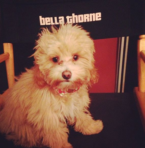 bella thorne kingston photos | kingston bella thorne dec 14 2012 Photo: Kingston Sitting In Bella ...