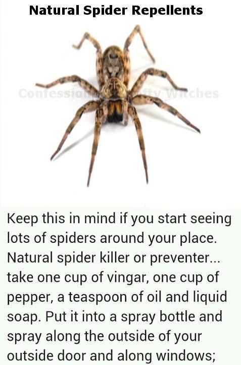 b383e57c6a8644ad719da888c5925b3e - How To Get Rid Of Spiders In Side Mirror