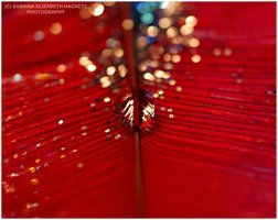 Red Feather Sphere Sparkle