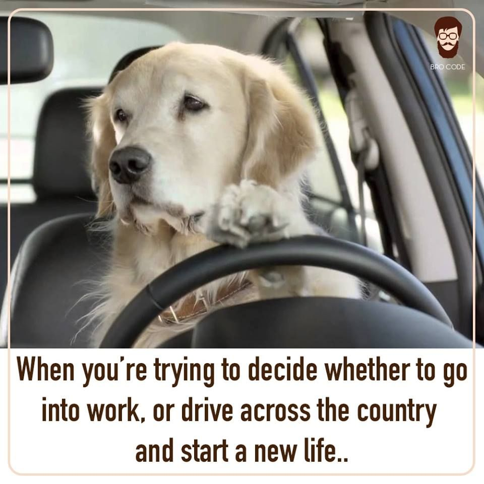 Start A New Life Or Work Get This Sorted People Brocode Instagood Love Memes Memesdaily Meme Newlife Party Igda Beard Life Life New Life