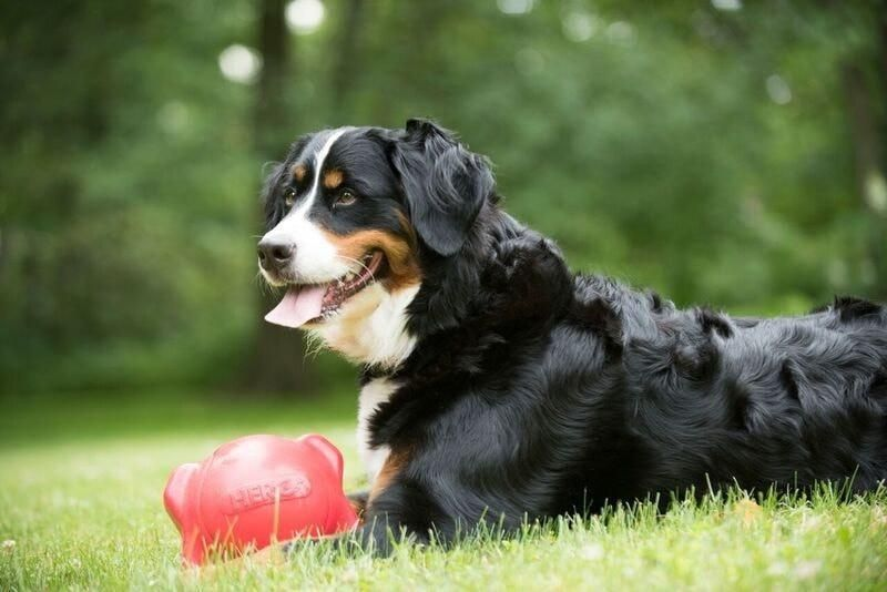 Soft Rubber Squeaker Ball With Nubs Dog Toys Dogs Dog Cat