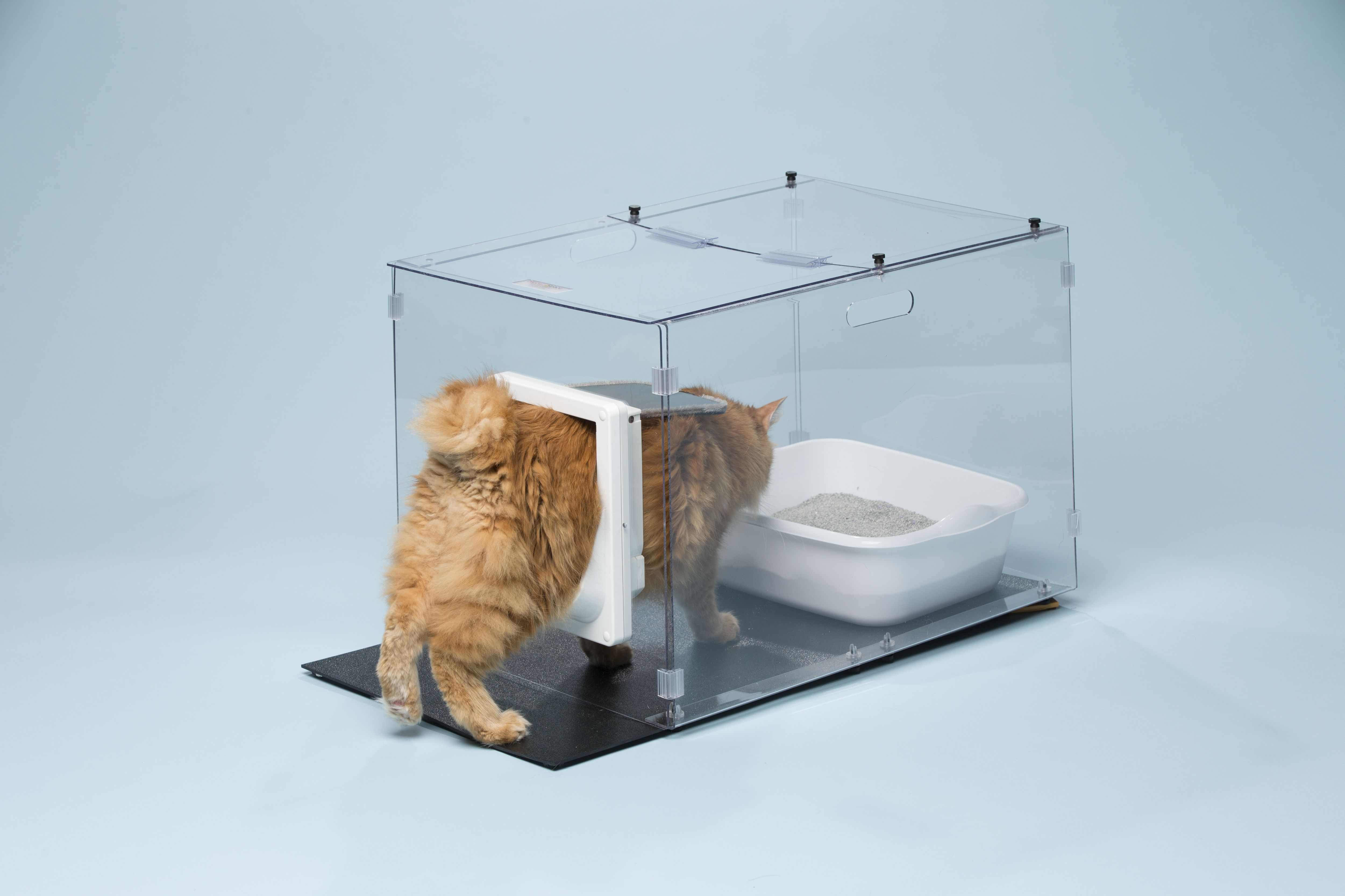 Keeping The Dog Out Of The Litter Box Cat Has A Micro Chp