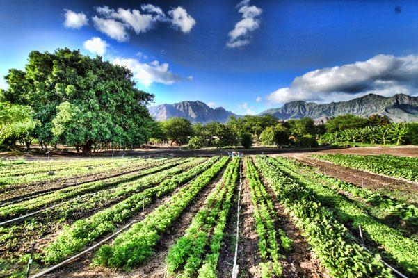 Správa OSN: drobné organické poľnohospodárstvo je jediný spôsob, ako nakŕmiť svet