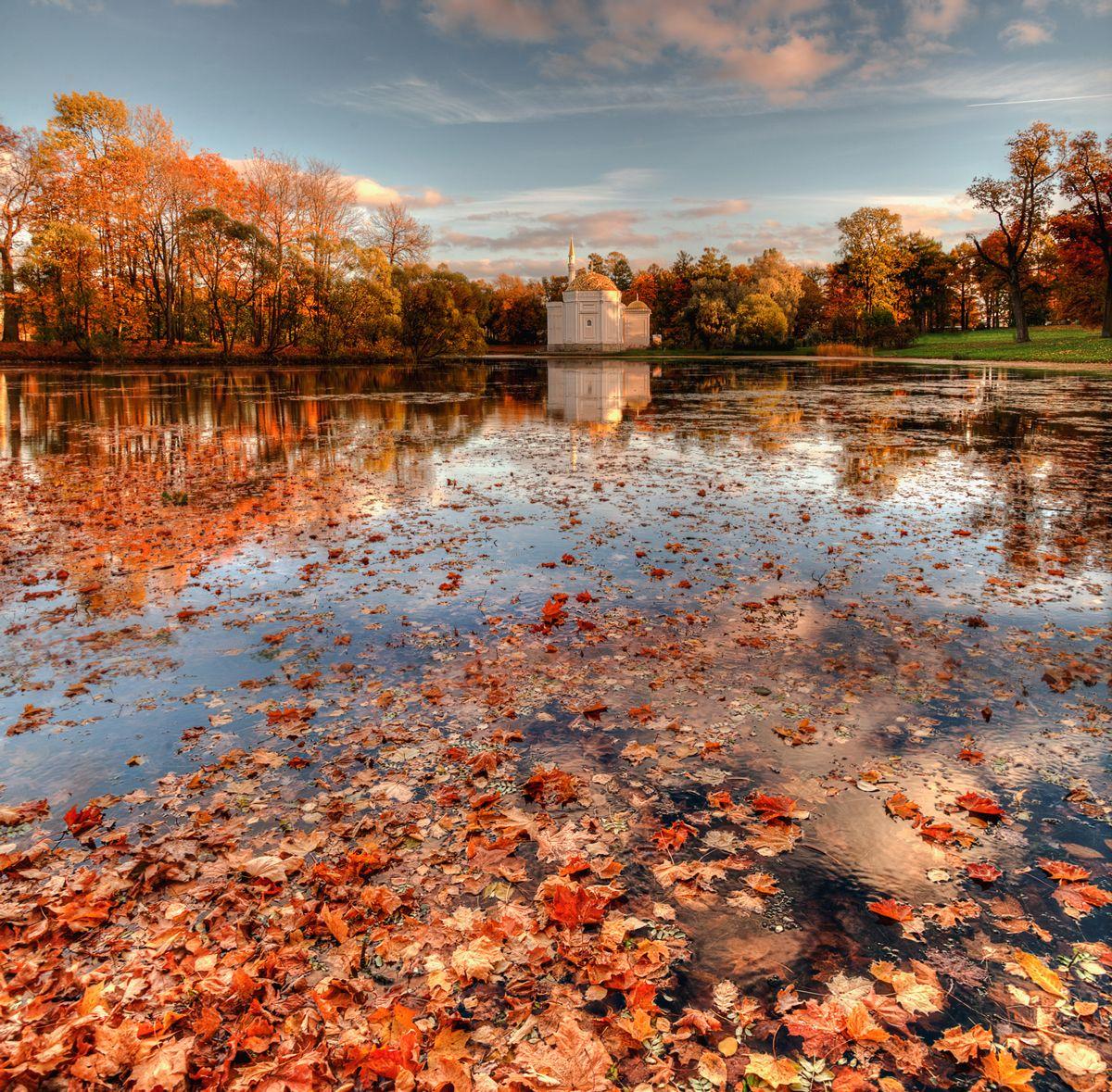 эдуард гордеев фото осень в царском селе это никак сказывалось