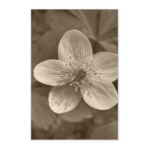 Black And White Flower Wood Wall Art, Single piece, 20 x 30 inches