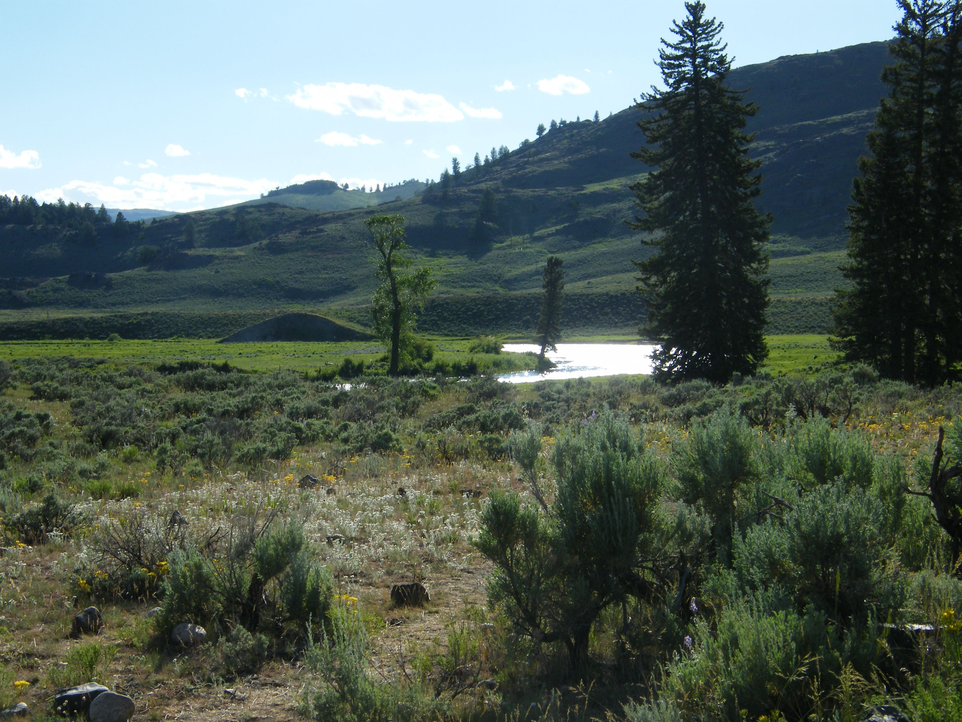 Slough Creek Yellowstone National Park