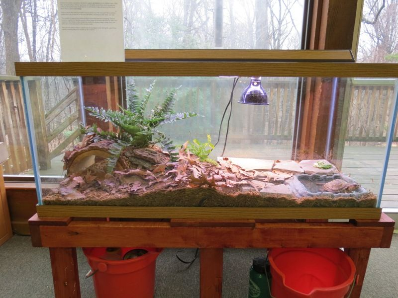 Nice Looking Turtle Terrarium Habitat Cage For A Box Turtle Box Turtle Habitat Turtle Habitat Box Turtle