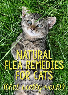 Making Flea Solution For Cats