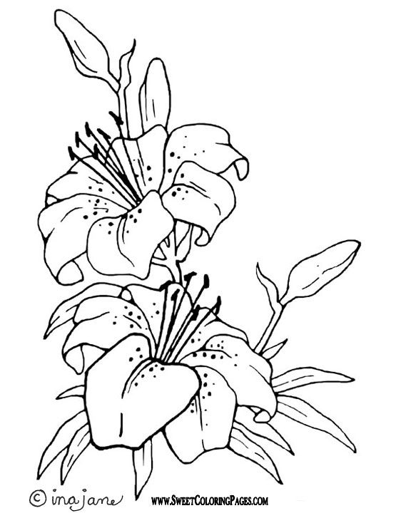 Flower Burning Flower Coloring Pages Coloring Pages Drawings
