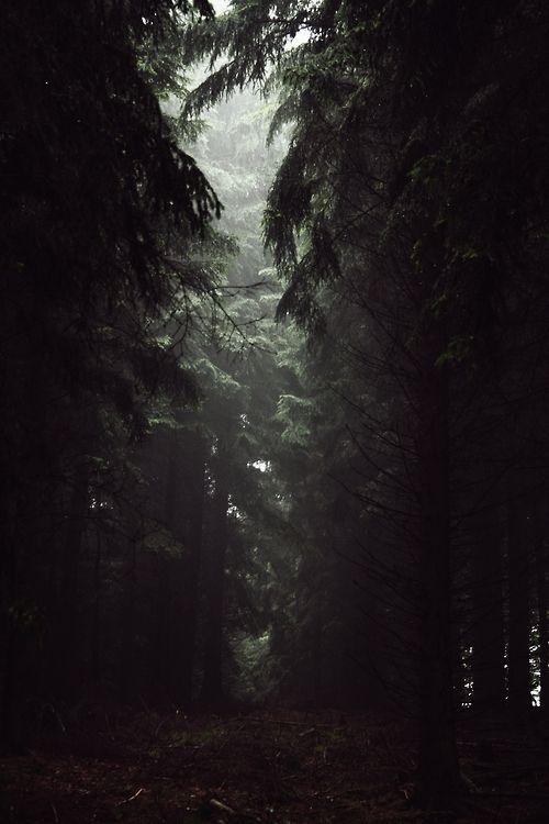 Woods Deep And Dark Fotos De Paisagem Florestas Sombrias