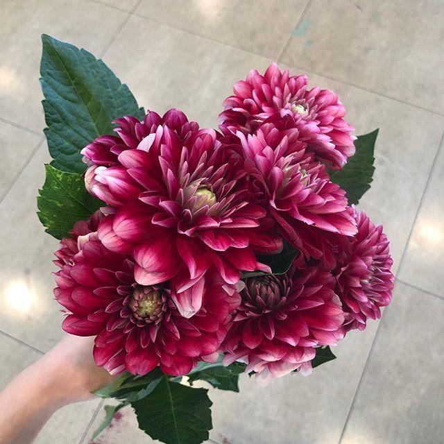 다알리아 .. . . . . . . #플라워클래스  다알리아 .. . . . . . . #플라워클래스 #플라워레슨#꽃꽂이#꽃선...