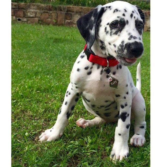 Really Love Ruby S Diamond Shape Dog Id Tag I Got It From Etsy