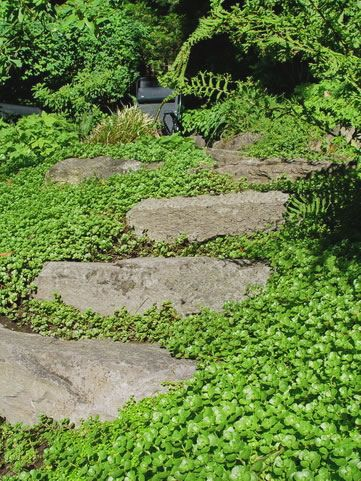 Amazing Stepable Plants For Yard And Garden Flats Sedum 640 x 480