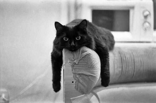<3 slouchy black cats #brilliant