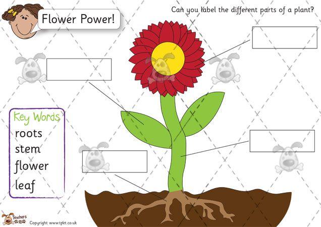 Teachers pet flower labelling pack colour premium printable teachers pet flower labelling pack colour premium printable classroom activities and games ccuart Choice Image