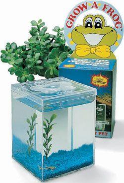 Delta Education Grow-A Frog Kit for Tadpoles