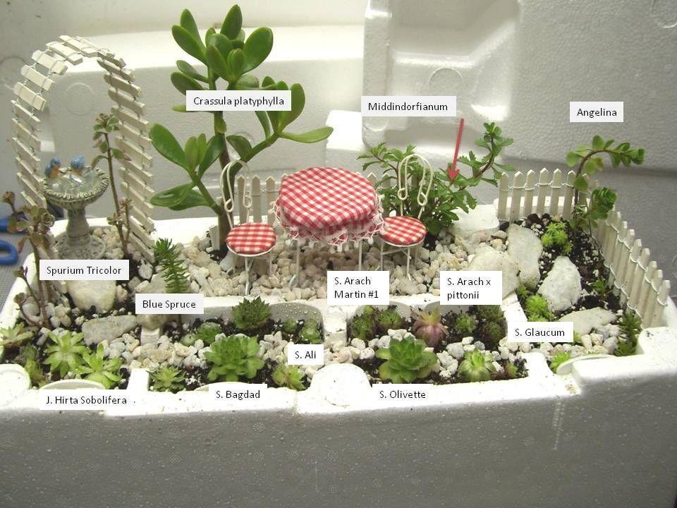 Small Succulent Gardens