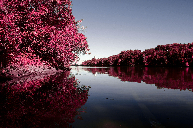 American River Infrared Sacramento, CA