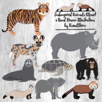Endangered Animals Clipart 9 Hand Drawn Wild Endangered Animal Species Endangered Animals Animal Clipart Animal Species
