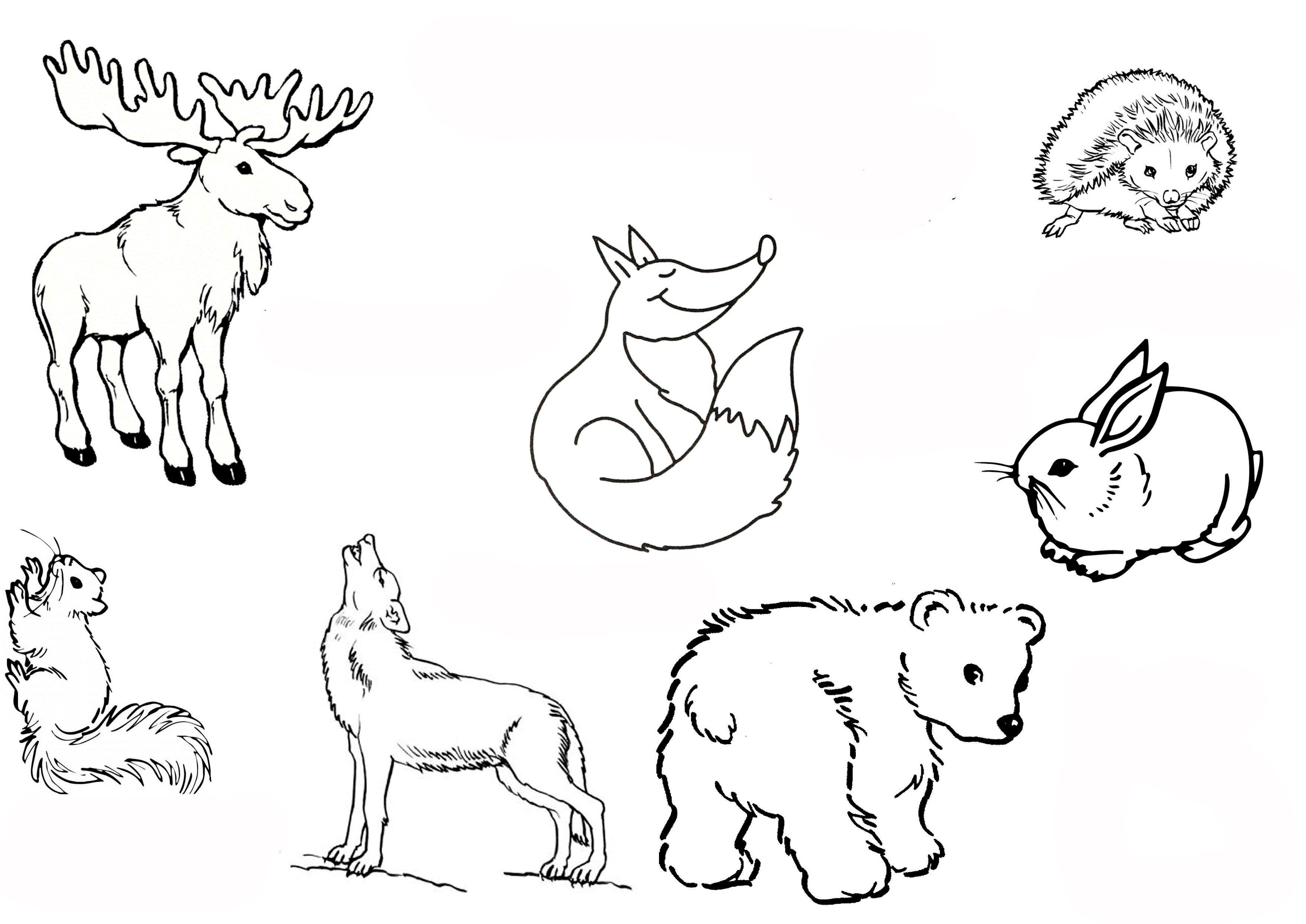 Waldtiere Ausmalbilder Waldtiere Ausmalbilder Tiere