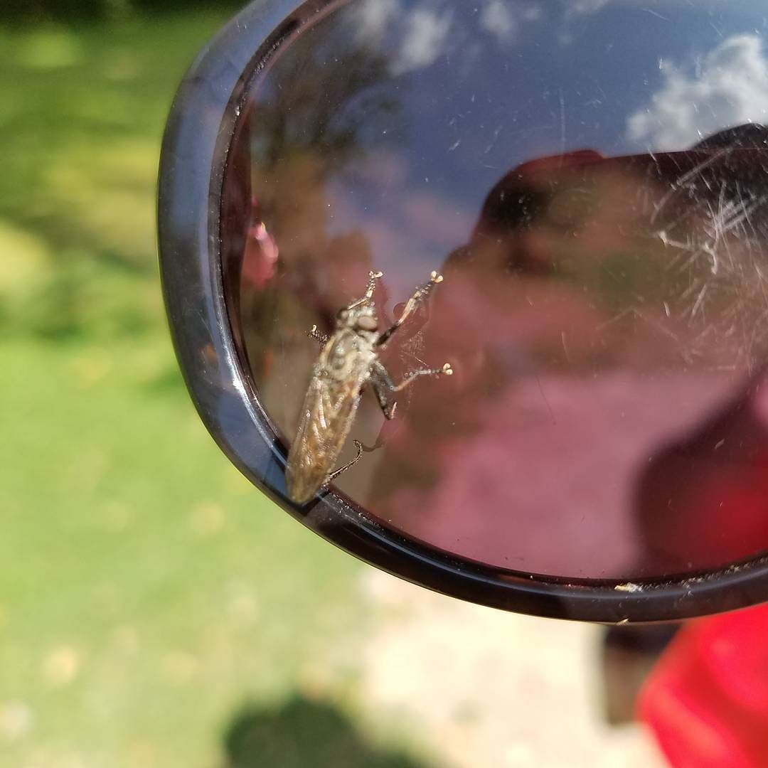 A fly trying to look fly on some sunglasses Rochesterny