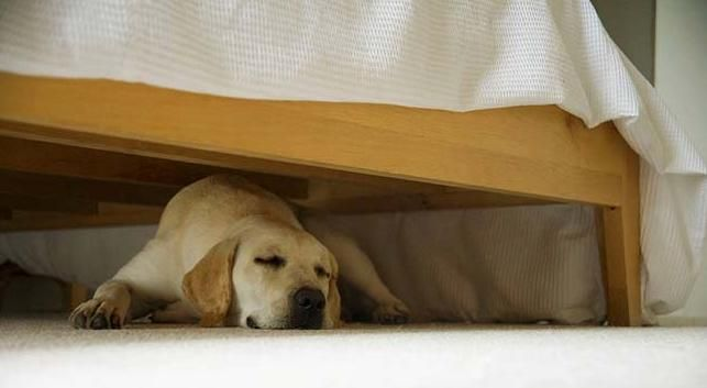 How To Get A Dog Out From Under The Bed