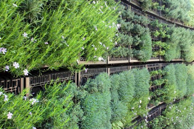 vertikálne bylinkovej záhrady