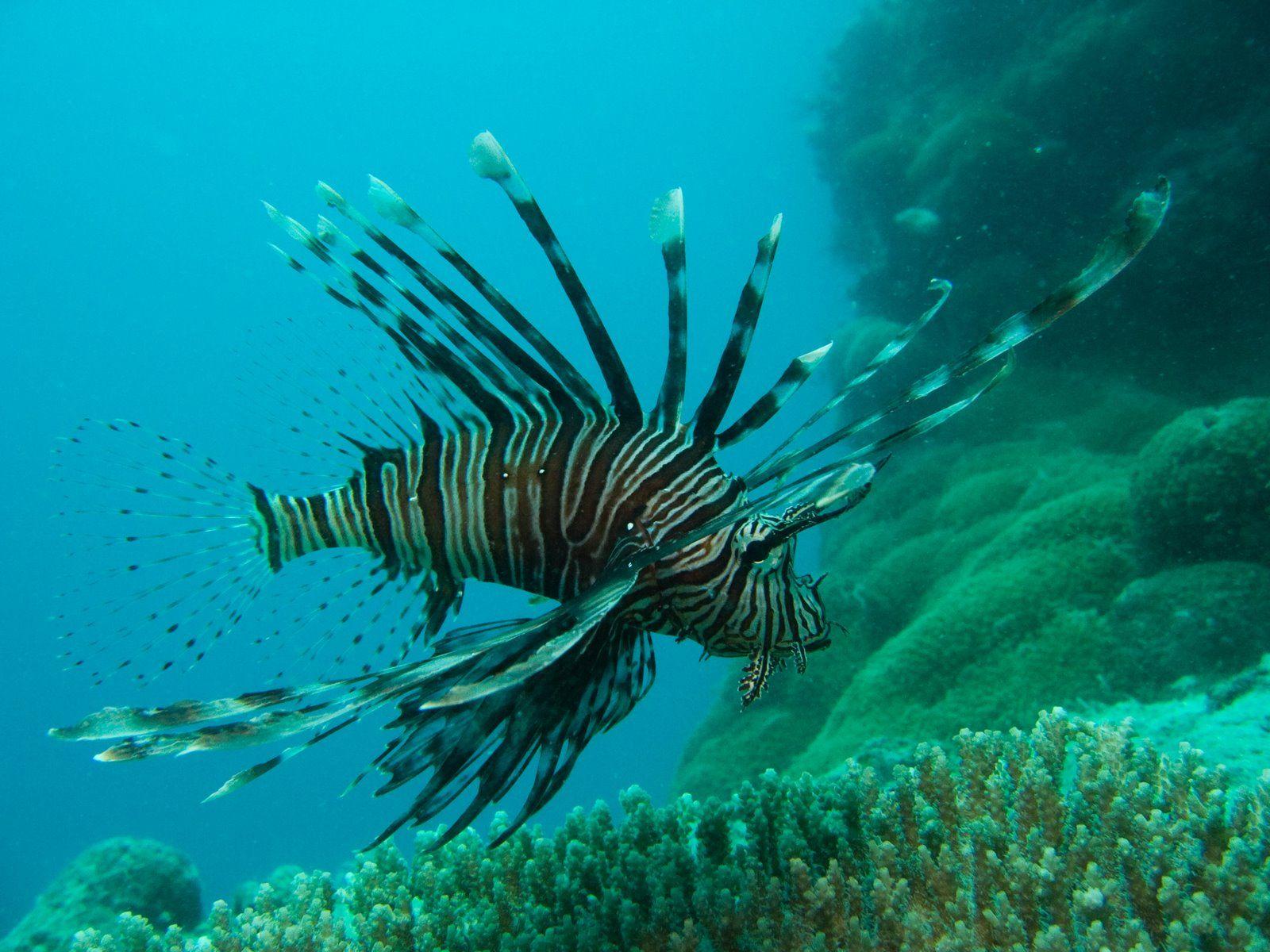 Coral Reef Weird Fish 3