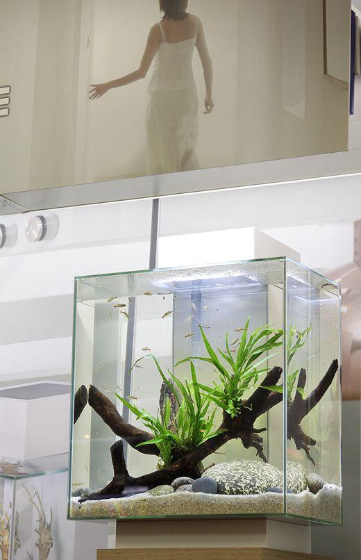 Tall Fluval Edge Aquarium Nanotank Aquascape By George Farmer Aquarium Aquarium Design Aquarium Fish Tank