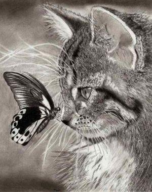 Pin Van Ans Zwierink Op Dieren Manieren Animales Gatos En Arte