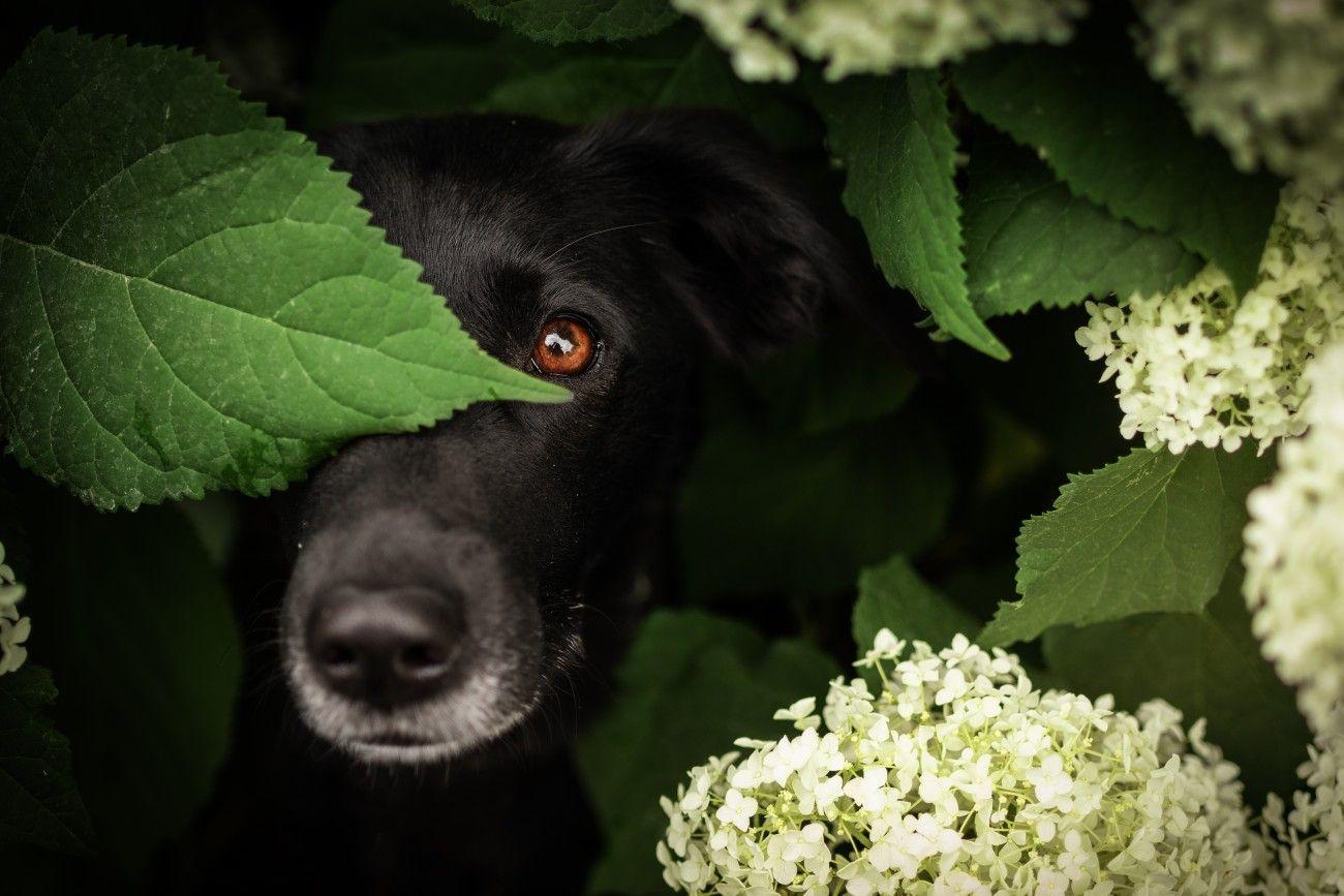 Mischling Paula Versteckt In Einer Hortenzie Hund Portraits Mischling Hunde