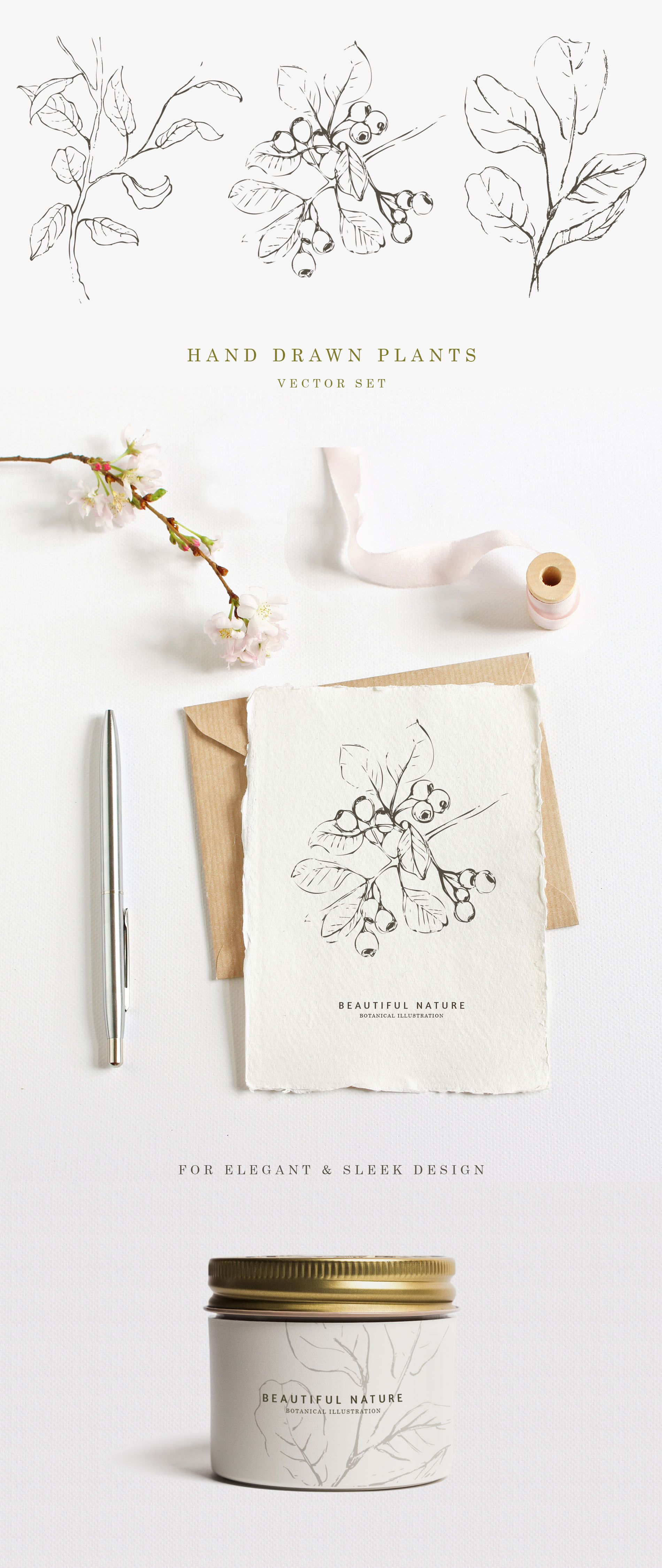 Hand drawn botanical plants for elegant and sleek design