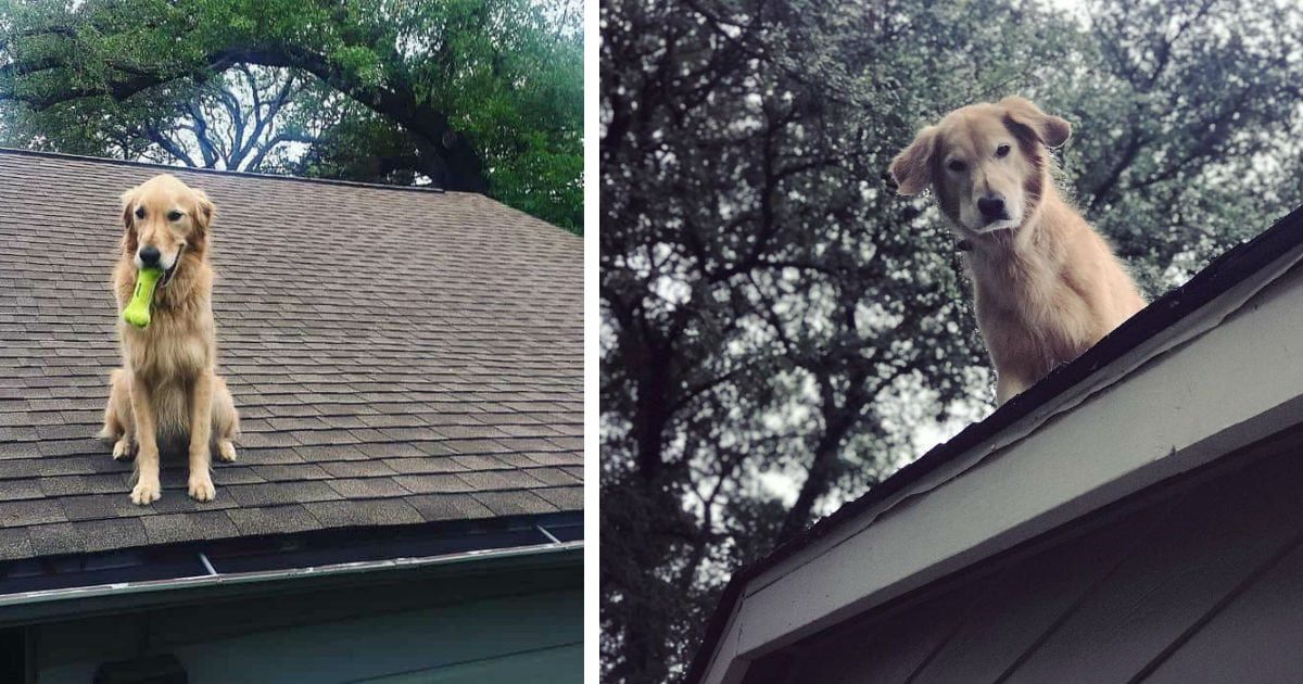 People Are Shocked When They Spot Dog On Roof, But Then