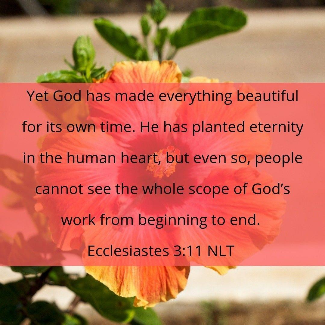 Ecclesiastes 3 11 Verse Of The Day Ecclesiastes Verse