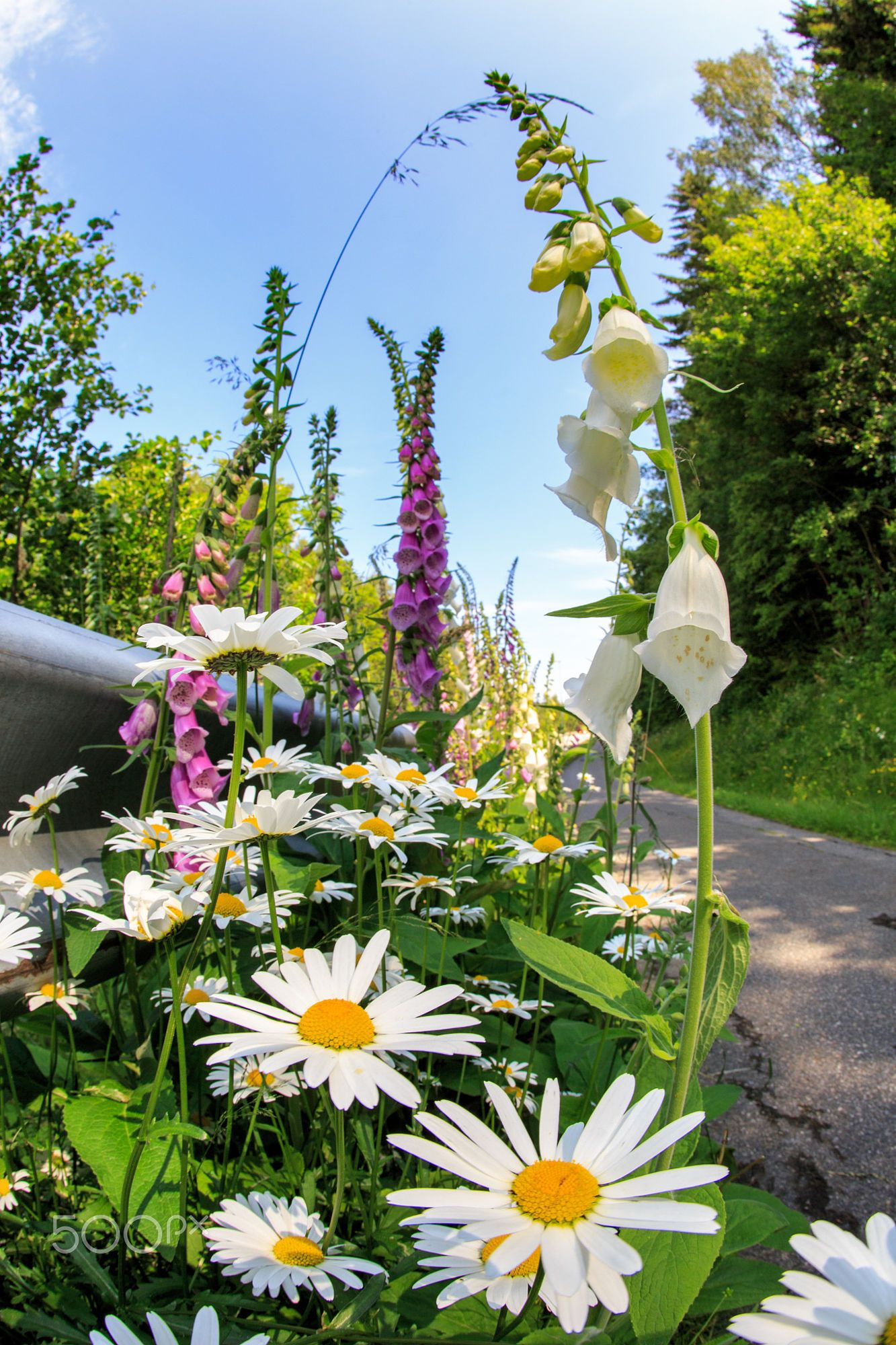 Summer flowers by May Elin Aunli on 500px