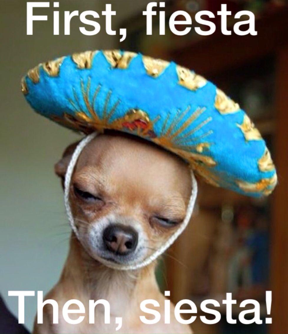 Happy Cinco De Mayo! First, fiesta. Then, siesta! Cute