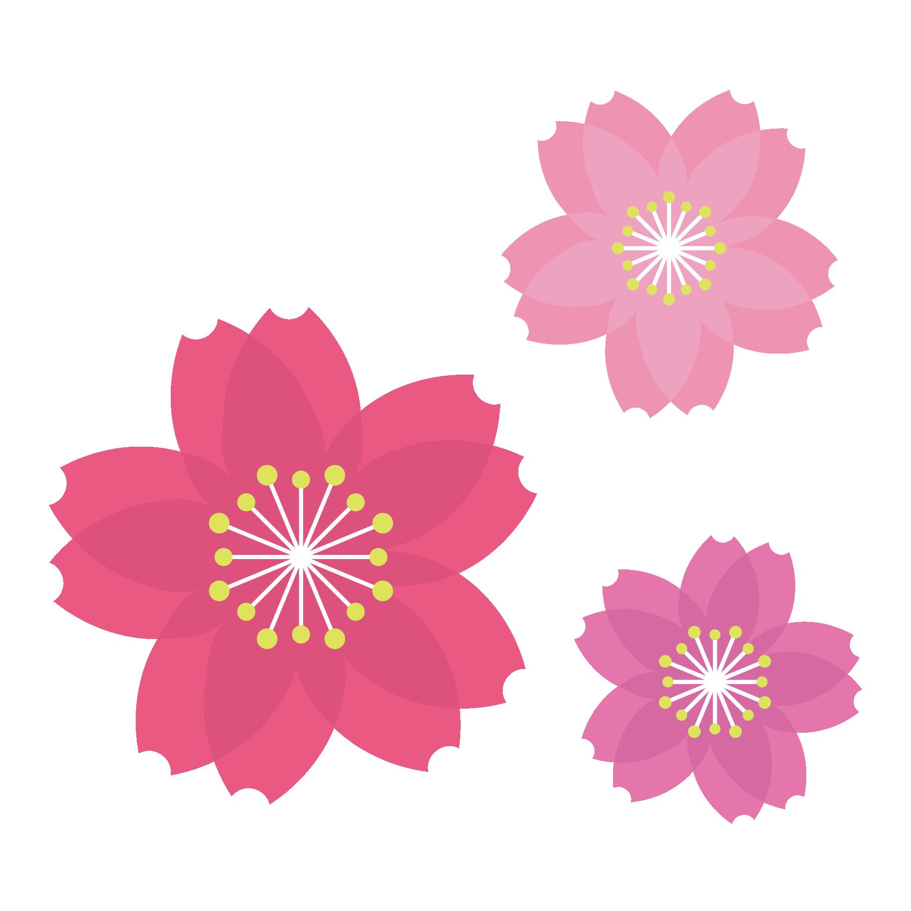 Adsbygoogle Window Adsbygoogle Push 商用可 春 といえば桜 サクラ さくら かわいい 桜の無料 フリー イラスト素材になります ちょっとした挿絵としてお使いください 花のスケッチ 桜イラスト イラスト