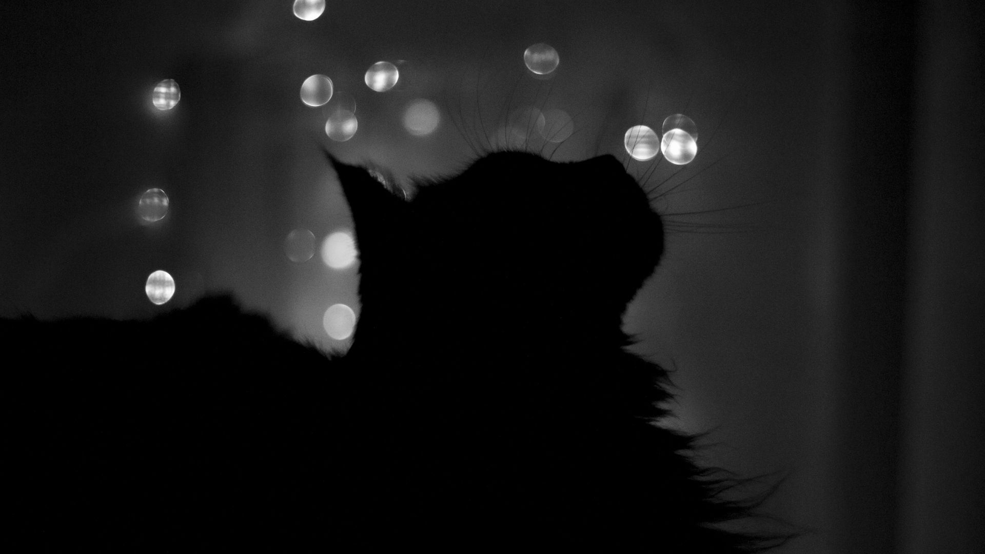 Download Wallpaper 1920x1080 Cat Shadow Highlights Features