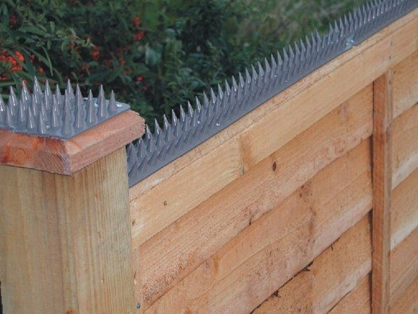 Cat Proof Garden Ideas Cat Fence Plastic Spikes Special