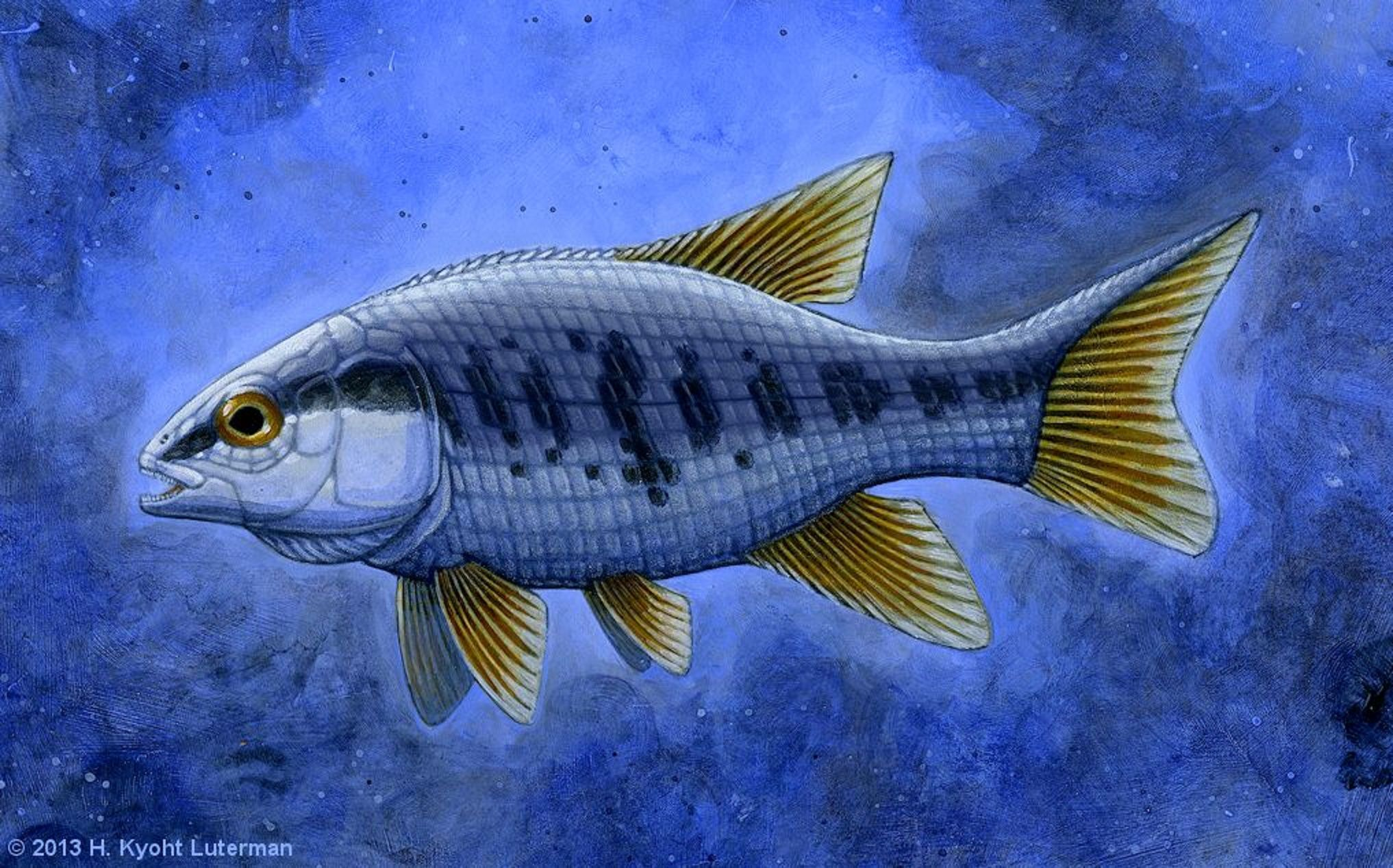 "Art illustration - Aquatic Animals - Semionotus: (""Flag-Back"") is an extinct genus of ray-finned fish found throughout Northern Pangaea (North America and Europe) during the late Triassic, becoming extinct in the Early Jurassic."