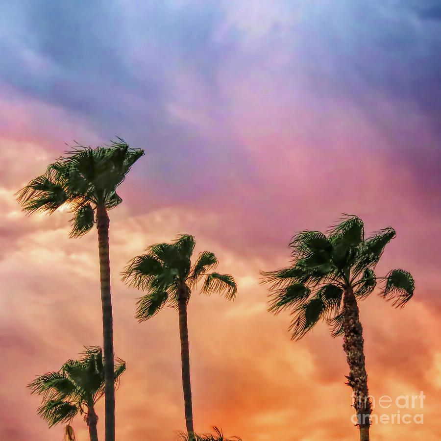 Colorful Storm By Elisabeth Lucas Sky Images Sunrise Clouds Stormy Sunset Tropics palm trees sunset clouds sky