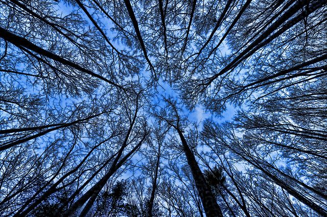 When The Forest Breathes by abennett23, via Flickr
