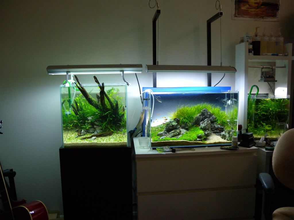 40cm Cube Nature Aquarium   The Planted Tank Forum