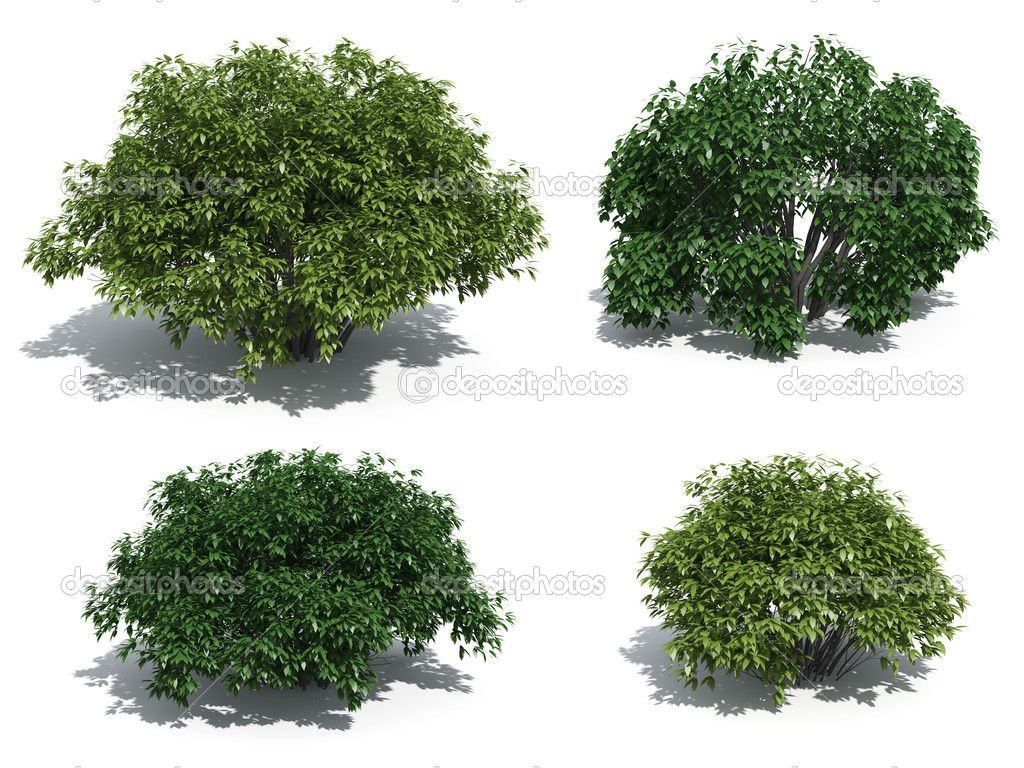 Bushes Stock Photo 3dmentor 2465002 Bushes Shrubs and