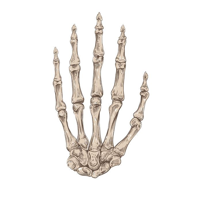 image result for bones of the hand | human bones | pinterest, Cephalic Vein