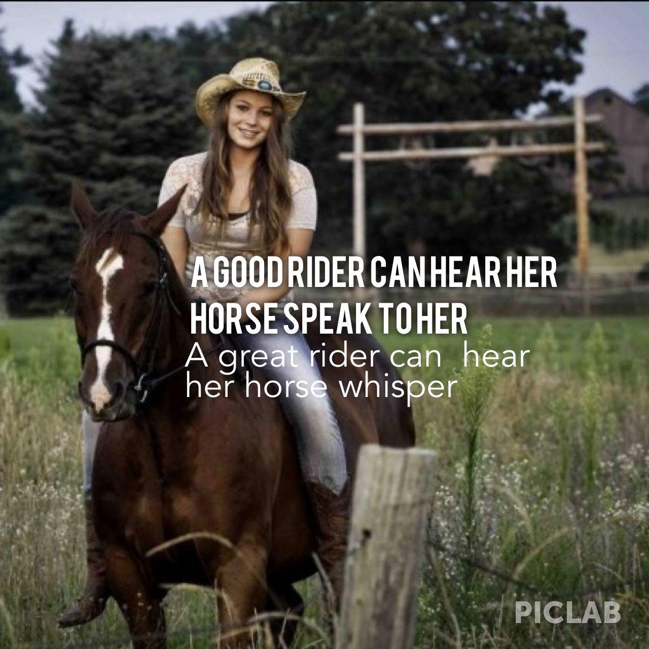 Horse quotes | Quotes | Pinterest | Horse, Equestrian ...