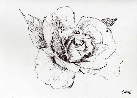 Black Line Flower Drawing : Lotus flower pencil drawing at getdrawings free for personal