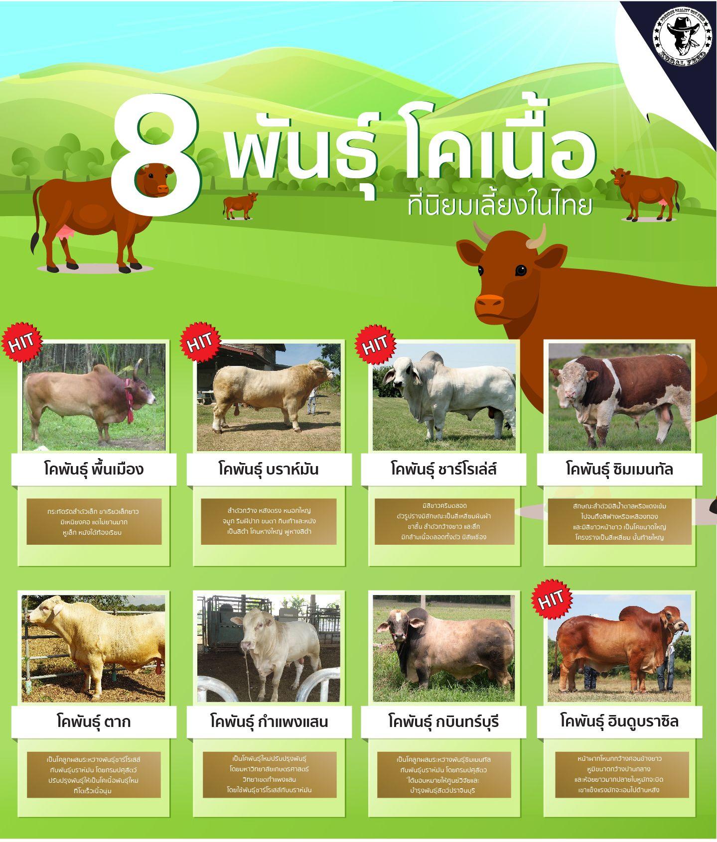 พ นธ โคเน อ ท น ยมเล ยงในประเทศไทย Nb Distribution Co Ltd ขาวดำ แบบสวน ออสเตรเล ย
