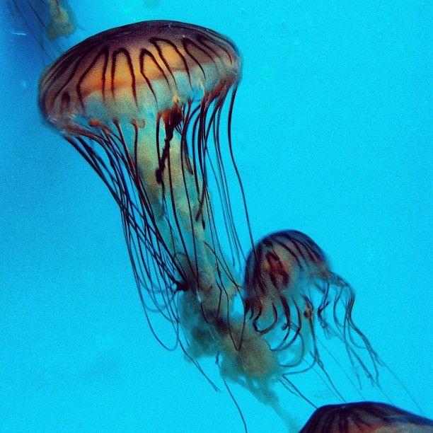 Birch Aquarium in San Diego! #jellyfish